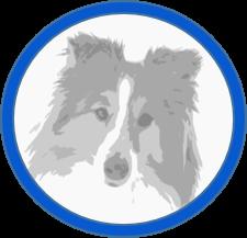 Hund-Seniorenbedarf-klein